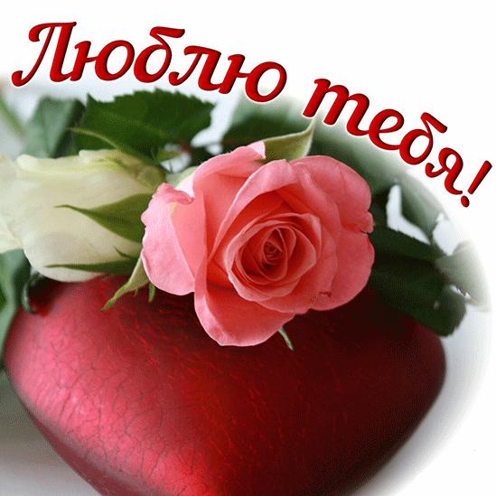 люблю тебя открытка с розой