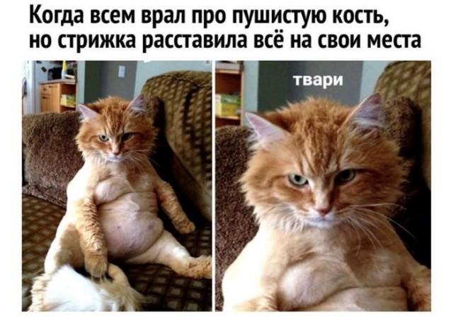Кота побрили