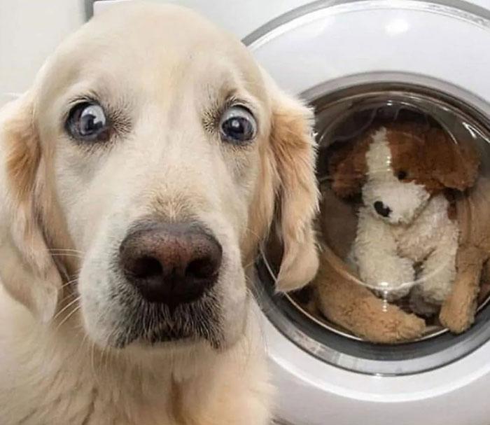 Удивленные глаза собаки когда игрушку стирают в машинке